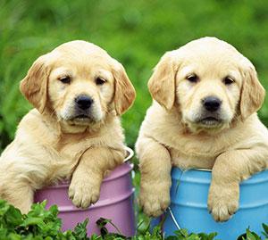 http://partridgefarmkennels.co.uk/wp-content/uploads/2016/07/2-dogs.jpg