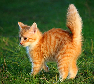 http://partridgefarmkennels.co.uk/wp-content/uploads/2016/07/cat.jpg